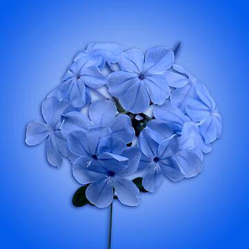 Sky Blue Cluster by roim