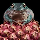 Frog Buddha by Angi Wallace