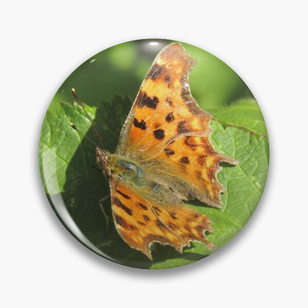 Comma butterfly (Polygonia c-album) on brambles Pin