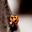 Ladybug by Emjay01