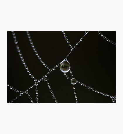 Dewdrops Photographic Print