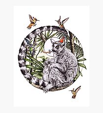 Party On Lemur Photographic Print