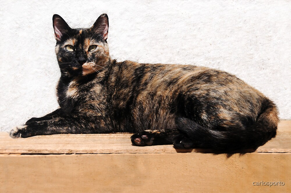 Cat on the Box by carlosporto