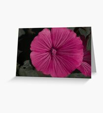 Peaceful Serenity Greeting Card