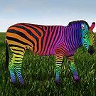 Rainbow Zebra by Kitty Bitty