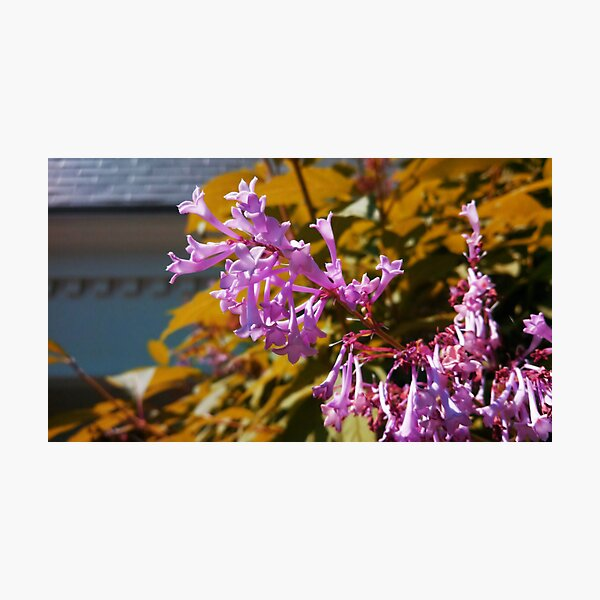 Pink flower in the breeze Photographic Print