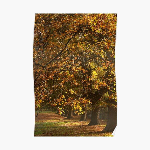 ~ The Oaks ~ Poster