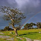 """""""A Rainbow And The Tree"""" by Phil Thomson IPA"""