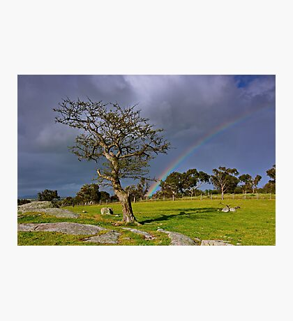"""A Rainbow And The Tree"" Photographic Print"
