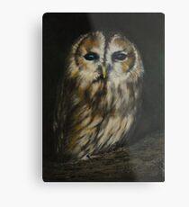 Tawny owl Metal Print