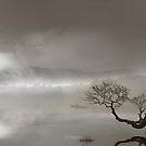 Hazy Waters by Igor Zenin