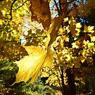 Yellow by NEDP