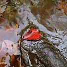red by NEDP