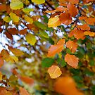 Fall is here by Algot Kristoffer Peterson