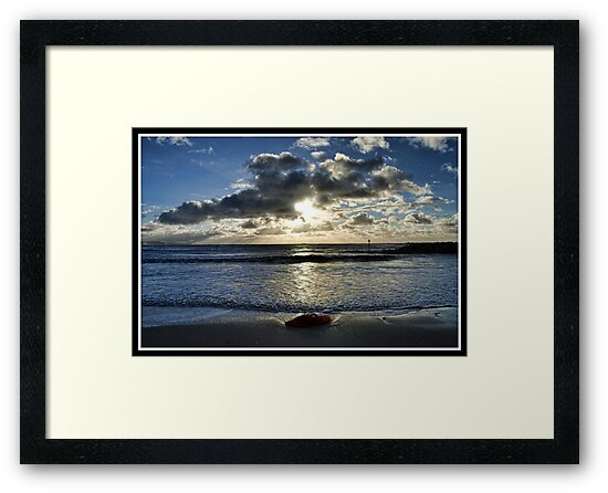 In The Frame by lynn carter