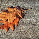 2 Leafs by SBPhoto2011