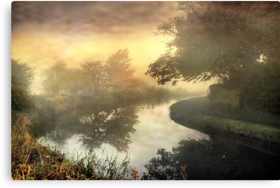 Trees in the mist . by Irene  Burdell