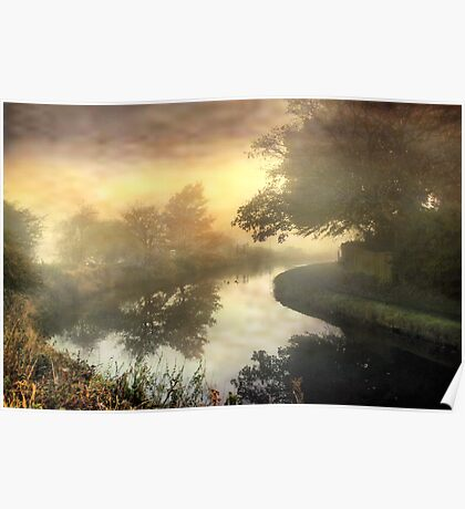 Trees in the mist . Poster