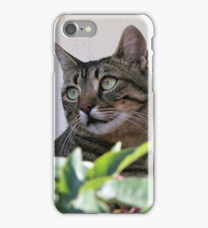 Tabby Cat Sitting In The Shade Behind Passiflora Vine iPhone Case/Skin