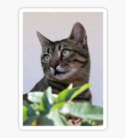 Tabby Cat Sitting In The Shade Behind Passiflora Vine Sticker