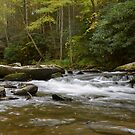 Bald River October 2013 by NEDP