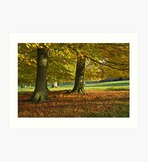 Autumn beeches Art Print