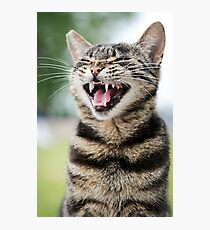 Laughing Cat  Photographic Print