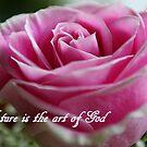 Beauty Rose by Paula Tohline  Calhoun