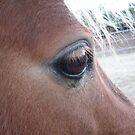 Eye of the pony by nosajnybor