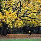 Autumn run by Javimage
