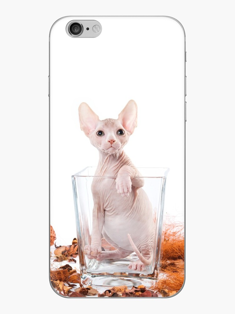 Charming kitty cat sphynx without hair by utekhina