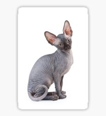 Charming kitty cat sphynx without hair Sticker