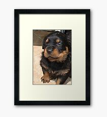 Cute Fluffy Female Rottweiler Pup Falling Asleep Framed Print