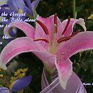 God's Gospel is Everywhere by Paula Tohline  Calhoun