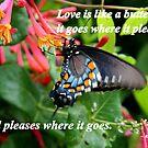 Love is Like a Butterfly by Paula Tohline  Calhoun