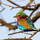 Pretty Bird!! by Anthony Goldman