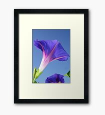 Single Ipomoea Purpurea Against Blue Sky Framed Print