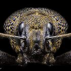 'Portrait Of A Weevil' by Kerrod Sulter