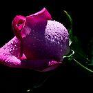 Pinky! by Doug Norkum