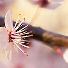 Signs Of Spring V by iltby