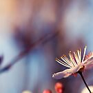 Signs Of Spring III by iltby