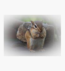 Cute Chipmunk Photographic Print