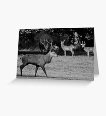 Deer in Black & White Greeting Card