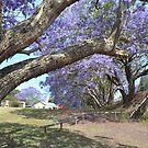 Jacaranda II by Gary Kelly
