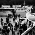 Perched Seagull in Paris, France by OlivierImages