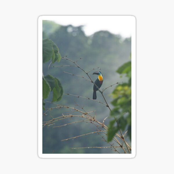 Toucan in the Mist Sticker