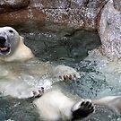 Swim anyone ? by miroslava