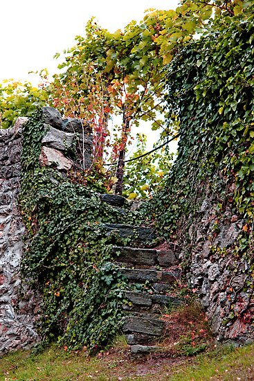 Vineyard Steps by phil decocco