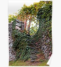 Vineyard Steps Poster