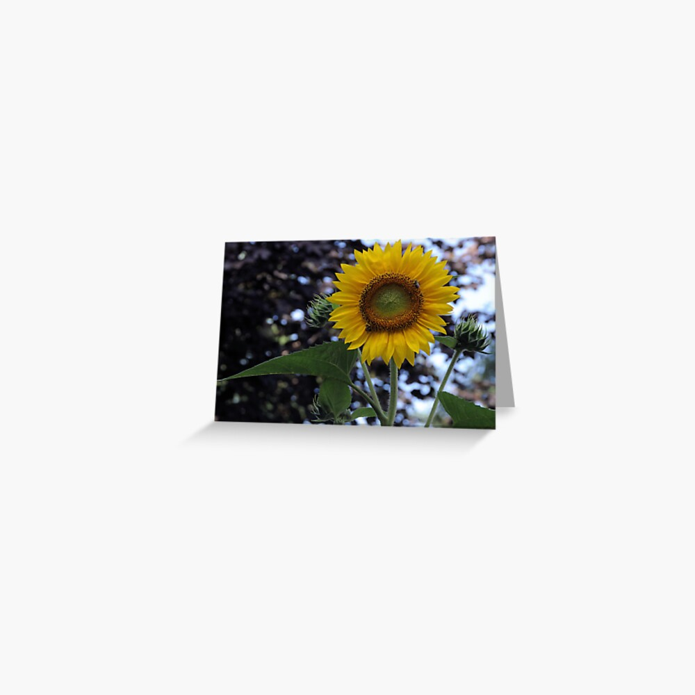 2013 Sun Flower Champlin Mn Greeting Card